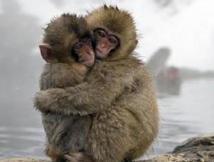 Công viên khỉ ở Nhật Bản