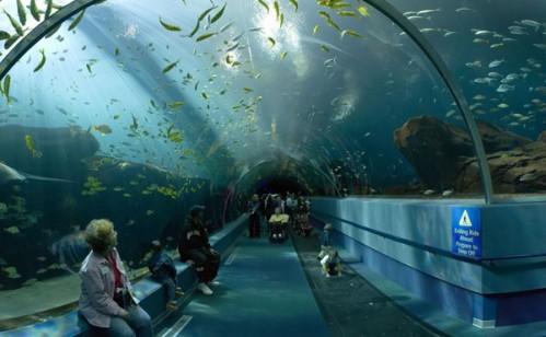 Du khách tham quan bảo tàng Hải dương học Nha Trang