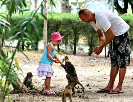 Khỉ trên đảo vui chơi cùng khách du lịch