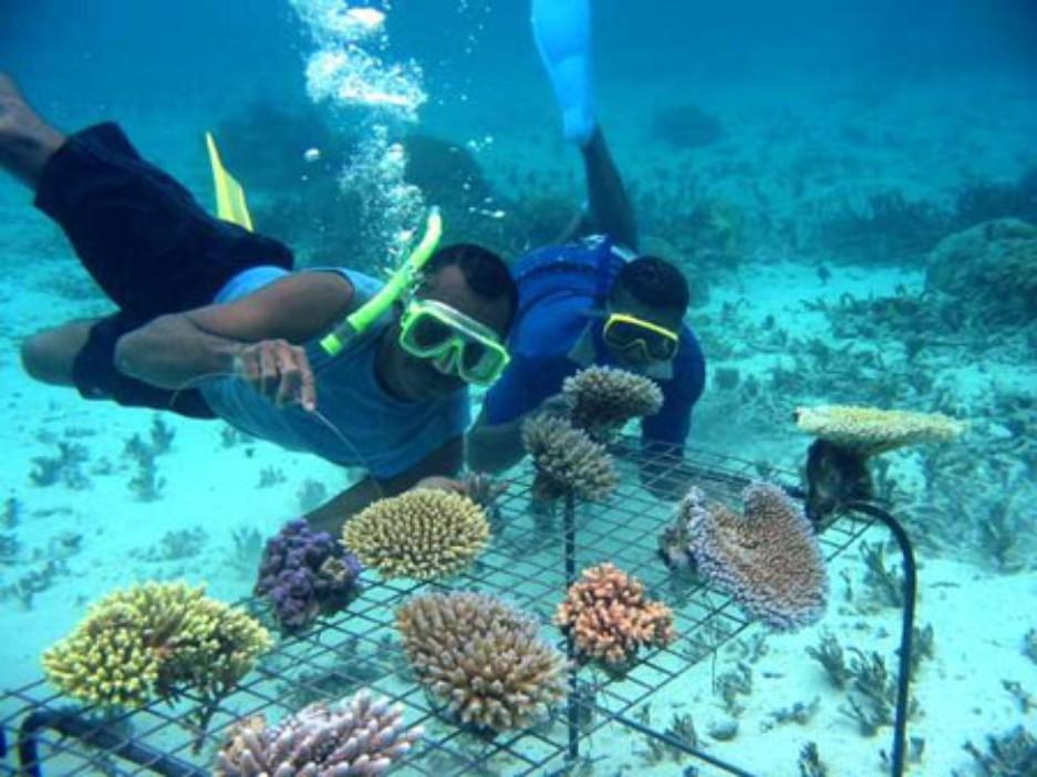 Những rặng san hô đầy màu sắc