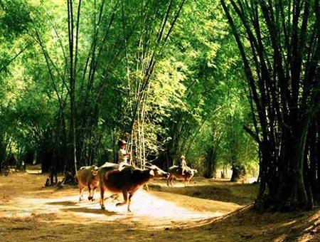 Những lũy tre gắn liền với làng quê Việt Nam