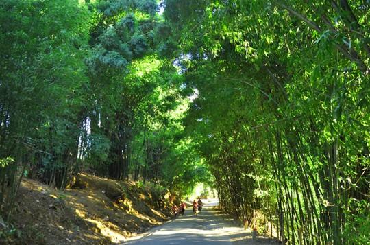 Đường tre Sapa râm mát quanh năm