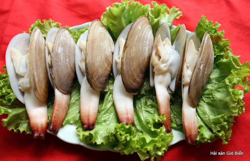 Tu hài - Loại hải sản quý hiếm của vùng biển