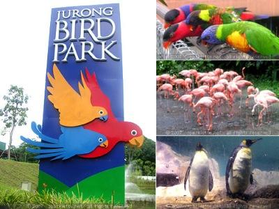 Vườn chim Jurong - Nơi bảo tồn hơn 300 loài chim khác nhau
