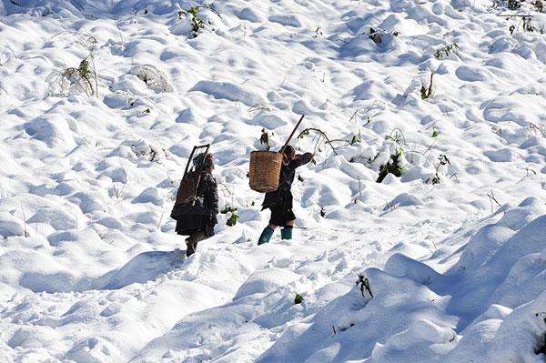 Đến Sapa mùa đông thích nhất là được ngắm tuyết