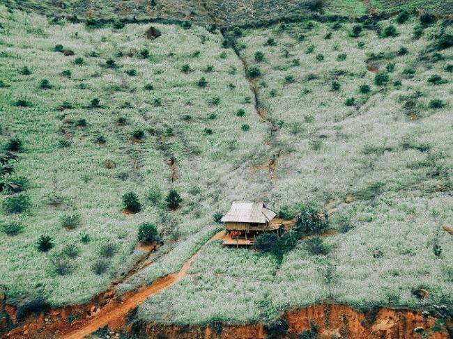Cải trắng ở thung lũng Nà Ka