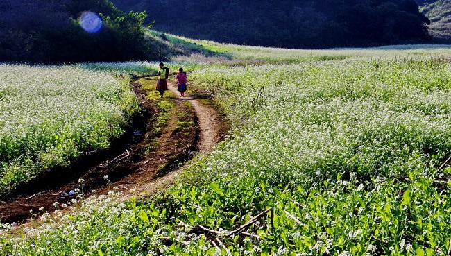 Vườn hoa cải của trang trại thuộc khu du lịch sinh thái Hồng Công